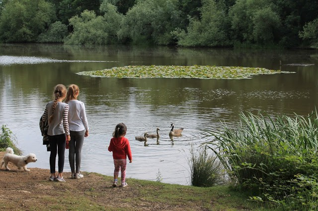 Our Father's day at Thorndon Country Park, Brentwood